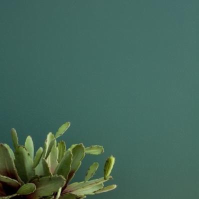 Le décor de Jules - Conseil en aménagement & décoration intérieure - décoration vert
